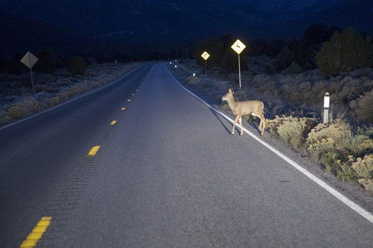 avoiding wildlife collisions in Saskatchewan